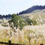 福知渓谷と砥峰高原はセットで行ける絶景名所