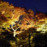 秋の須磨離宮公園は紅葉の二つの顔を見れます!
