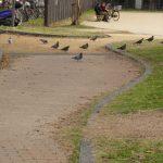 兵庫県長田区の若松公園は他の公園に絶対ないものがある?
