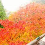 播州清水寺は紅葉の時期がシーズンで赤・緑・黄の絶景を1度で楽しめる?ライトアップもあるよ!