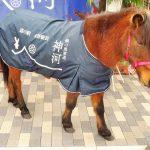 道の駅銀の馬車道・神河は柚子のお土産や地域のお菓子があり本当に馬がいた!
