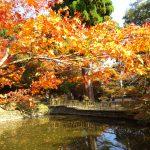 丹波市のお寺を回り紅葉狩り巡りをしよう(絶景写真多数)