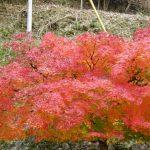 日本遺産に決定した閑谷学校と紅葉の相性抜群っぷりを紹介!