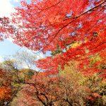 神戸市立森林植物園は万人にオススメの逆さ紅葉スポット!