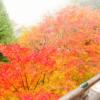 播州清水寺は紅葉の時期がシーズンで赤・緑・黄の絶景を1度で楽しめる?ライトアップ