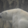 王子動物園のパンダとシロクマが可愛すぎる件